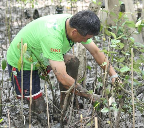 OKIデータ、タイの海岸にマングローブ4,000本を植林
